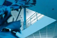 Il blu lascia il corridoio dell'ufficio della palma fotografia stock libera da diritti