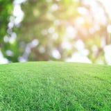 Il bokeh e l'erba su fondo Immagine Stock