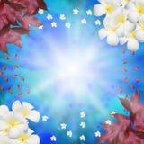 Il bokeh ed il fiore del fondo sui garss Immagine Stock