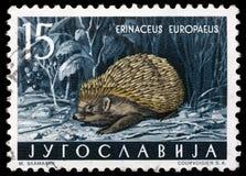 Il bollo stampato in Iugoslavia mostra l'istrice europeo Immagini Stock