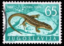 Il bollo stampato in Iugoslavia mostra la lucertola Immagine Stock Libera da Diritti