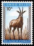 Il bollo stampato nel Congo mostra l'antilope di roano Fotografie Stock