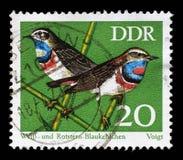Il bollo stampato nel GDR mostra il pettazzurro dell'uccello Fotografia Stock