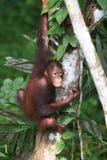 Il Borneo Fotografie Stock Libere da Diritti