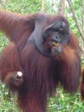 Il Borneo Fotografia Stock