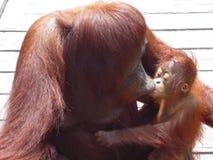 Il Borneo Immagine Stock Libera da Diritti