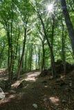 Il boschetto del faggio del ` di Le Pontis del ` - Alpes - Francia Fotografia Stock Libera da Diritti
