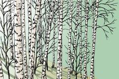 il boschetto di verde del fogliame della betulla può Fotografia Stock Libera da Diritti