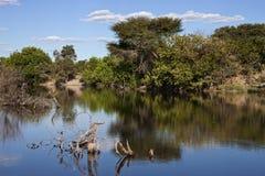 Il Botswana - Manica sommersa di Savuti Immagine Stock