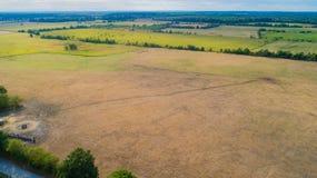 Il bovino soffre dalla siccità nei campi in Germnay fotografie stock