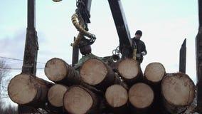 Il braccio della gru scarica i ceppi del legname dal camion alla segheria archivi video
