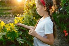 Il brunch della ragazza e dell'uva del bambino, lavoro su un'azienda agricola familiare Fotografia Stock Libera da Diritti