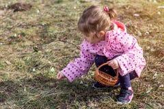 Il bucaneve del tempo di raccolto del bambino della primavera fiorisce nella foresta di primavera Fotografia Stock