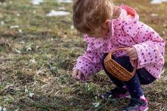 Il bucaneve del tempo di raccolto della ragazza della primavera fiorisce nella foresta di primavera Fotografie Stock