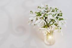 Il bucaneve fiorisce al vaso sul fondo bianco della lucentezza con il Orn Fotografie Stock Libere da Diritti