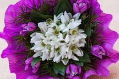 Il bucaneve fiorisce il mazzo con i ramoscelli dell'abete Immagini Stock