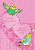 Il Budgies del biglietto di S. Valentino Fotografie Stock