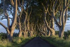 Il buio protegge - contea Antrim - l'Irlanda del Nord immagini stock libere da diritti