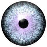 Il bulbo oculare animale con il giro porpora, occhio del lupo 3d con la vista pericolosa, ha isolato il fondo bianco fotografie stock