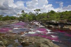 Il Caño Cristales, uno di fiumi più bei nel mondo Immagini Stock