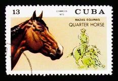 Il caballus quarto di ferus di equus del cavallo, cavallo cresce serie, circa 1972 Fotografie Stock Libere da Diritti
