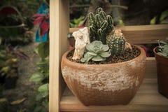 Il cactus Fotografia Stock