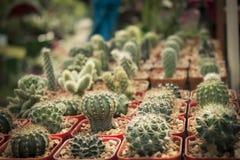 Il cactus Immagini Stock Libere da Diritti