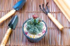 Il cactus e l'attrezzatura sono decorazioni Fotografia Stock Libera da Diritti