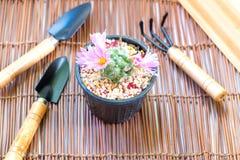 Il cactus e l'attrezzatura sono decorazioni Fotografie Stock