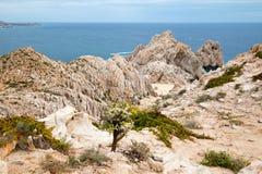 Il cactus sulla spiaggia di trascuratezza di divorzio di Solmare del supporto alle terre si conclude in Cabo San Lucas nella Bass immagine stock libera da diritti