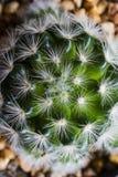 Il cactus sulla tavola ? area di lavoro fotografie stock