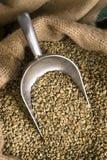 Il caffè crudo semina il fagiolo in serie dell'agricoltura della borsa di tela da imballaggio del mestolo Immagini Stock Libere da Diritti