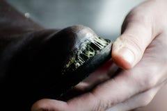 Il calzolaio ripara le suole di scarpa nell'officina Riparazione degli stivali Immagini Stock Libere da Diritti
