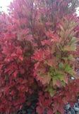 Il cambiamento delle stagioni cade ed autunno fotografia stock libera da diritti