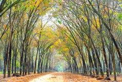 Il cambiamento di gomma di stagione del percorso va con la strada non asfaltata dell'allineamento degli alberi Fotografia Stock