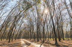 Il cambiamento di gomma di stagione del percorso va con la strada non asfaltata dell'allineamento degli alberi che conduce in giù Immagini Stock
