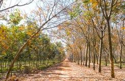 Il cambiamento di gomma di stagione del percorso va con la strada non asfaltata dell'allineamento degli alberi che conduce in giù Immagine Stock
