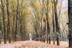 Il cambiamento di gomma di stagione del percorso va con la strada non asfaltata dell'allineamento degli alberi che conduce in giù Immagini Stock Libere da Diritti