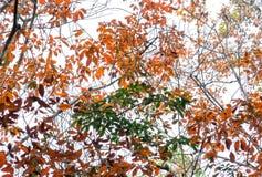 Il cambiamento di gomma di stagione del percorso va con la strada non asfaltata dell'allineamento degli alberi che conduce in giù Fotografia Stock