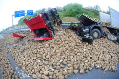 Il camion distrugge dal panaroma delle rape Fotografia Stock Libera da Diritti