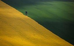 Il campo è diviso nelle parti gialle e verdi diagonalmente fotografia stock libera da diritti
