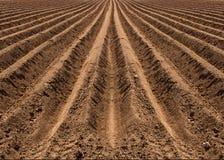 Il campo è preparato per la piantatura, molla in anticipo fotografia stock