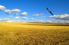 Il campo. Fotografia Stock
