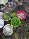 Il campo che cucina le piante commestibili e le verdure in intestini e mette sopra il fuoco Fotografia Stock