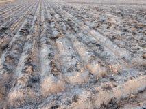 Il campo coltivato bruciato con i solchi ha preparato per la piantagione seguente Immagine Stock Libera da Diritti