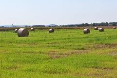 Il campo con le balle dei mucchi di fieno Fotografia Stock