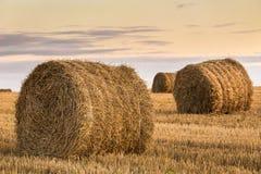 Il campo con le balle della paglia dopo il concetto di agricoltura del raccolto Immagine Stock