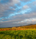 Il campo con un verde ed erba falciata al tramonto Fotografie Stock Libere da Diritti