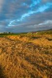 Il campo con un verde ed erba falciata al tramonto Immagini Stock