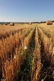 Il campo dei mucchi di fieno #4 Fotografia Stock Libera da Diritti